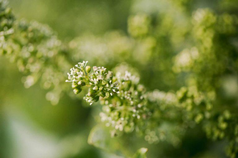 Unesco : l'échange de bonnes pratiques du vignoble du Cognac